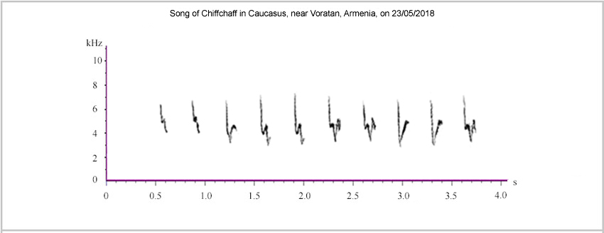 Sonograms of Chiffchaff song from Armenia